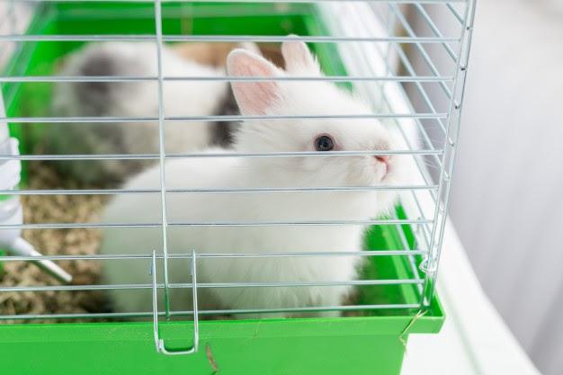 Lưới thép làm chuồng thỏ, các loại lưới thép làm chuồng thỏ tốt nhất